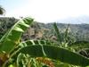 Vign_montagnes_feuille_de_bananes