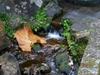 Vign_ruisseau